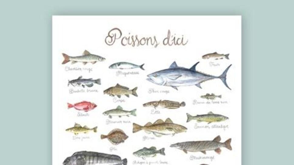 Affiche d'une illustration des différents poissons du Québec.