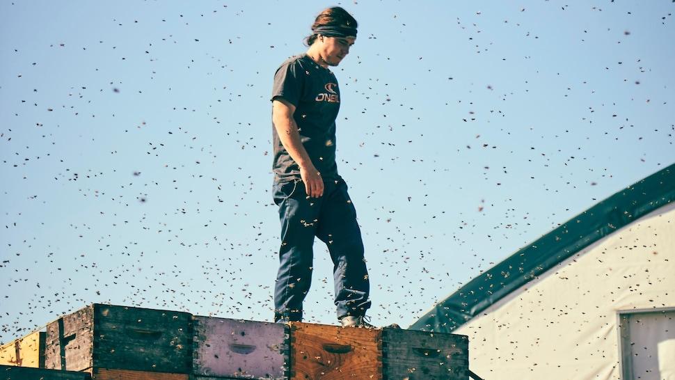 Un apiculteur est debout sur un chargement de ruches d'abeilles.