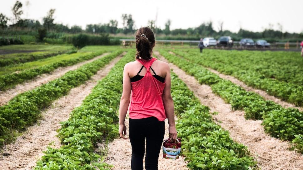 Jeune fille de dos qui marche dans un champ de fraises du Québec.