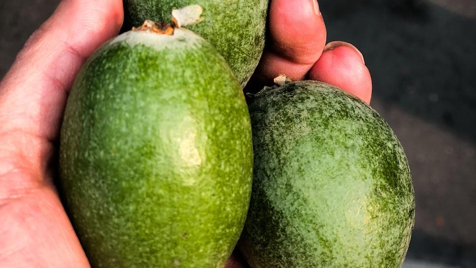 Trois feijoas, un fruit de la famille de la goyave.