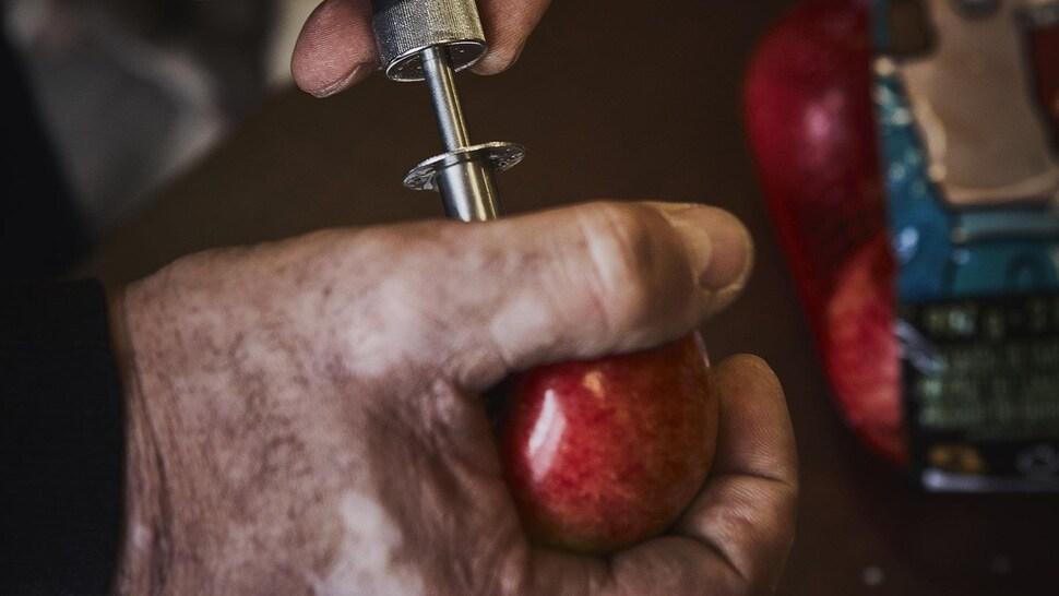 Contrôle de qualité sur une pomme rouge du Québec.