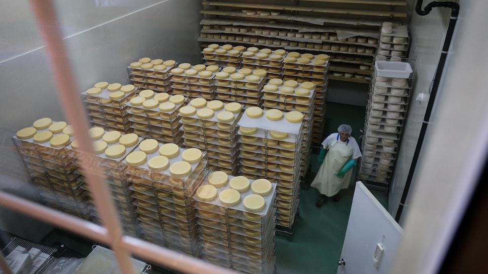 Des fromages en salle d'affinage.