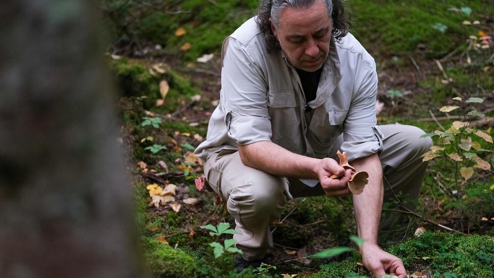 Un homme cueille des champignons.