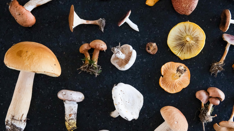 Des champignons sur une table noire.