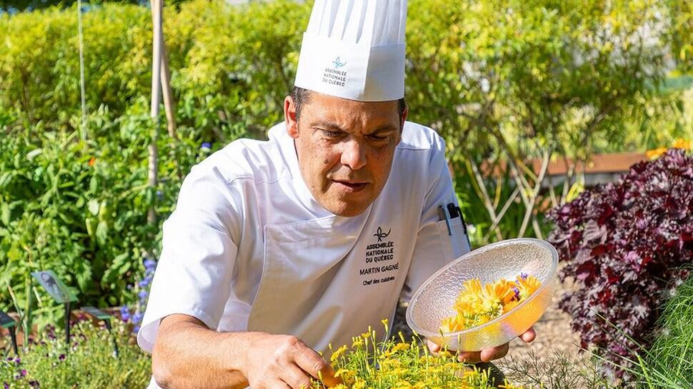 Un chef cueille des herbes dans un jardin.