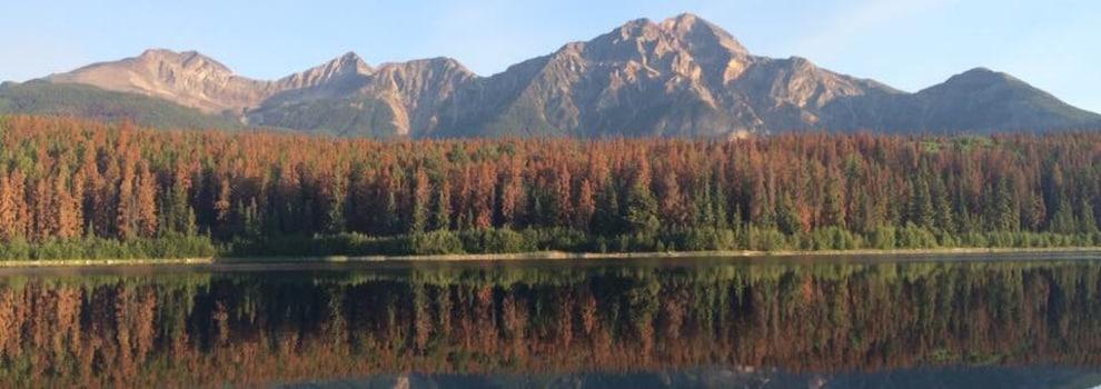 Une forêt avec des arbres tués par le dendoctrone du pin, derrière un lac.