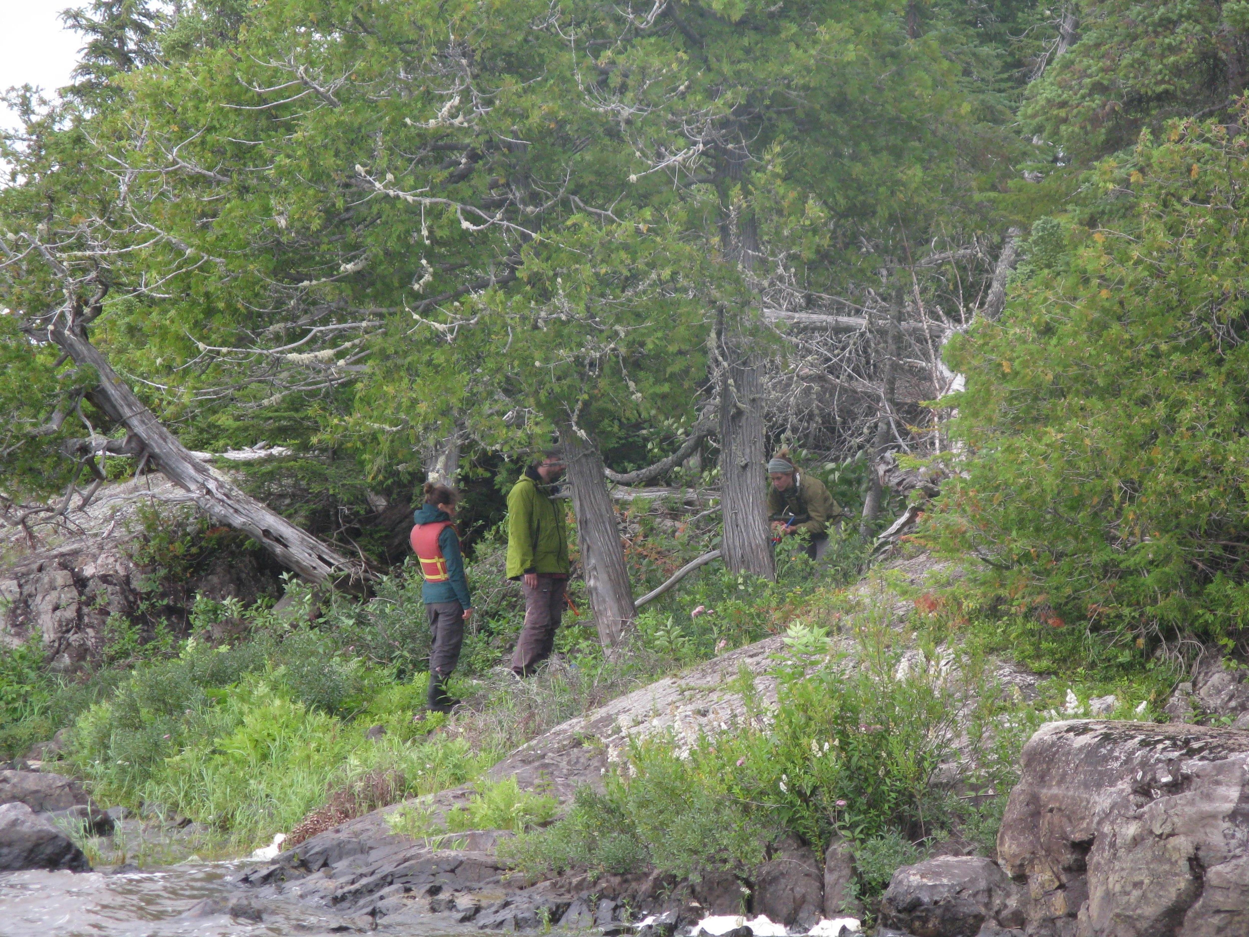 Deux personnes dans la forêt
