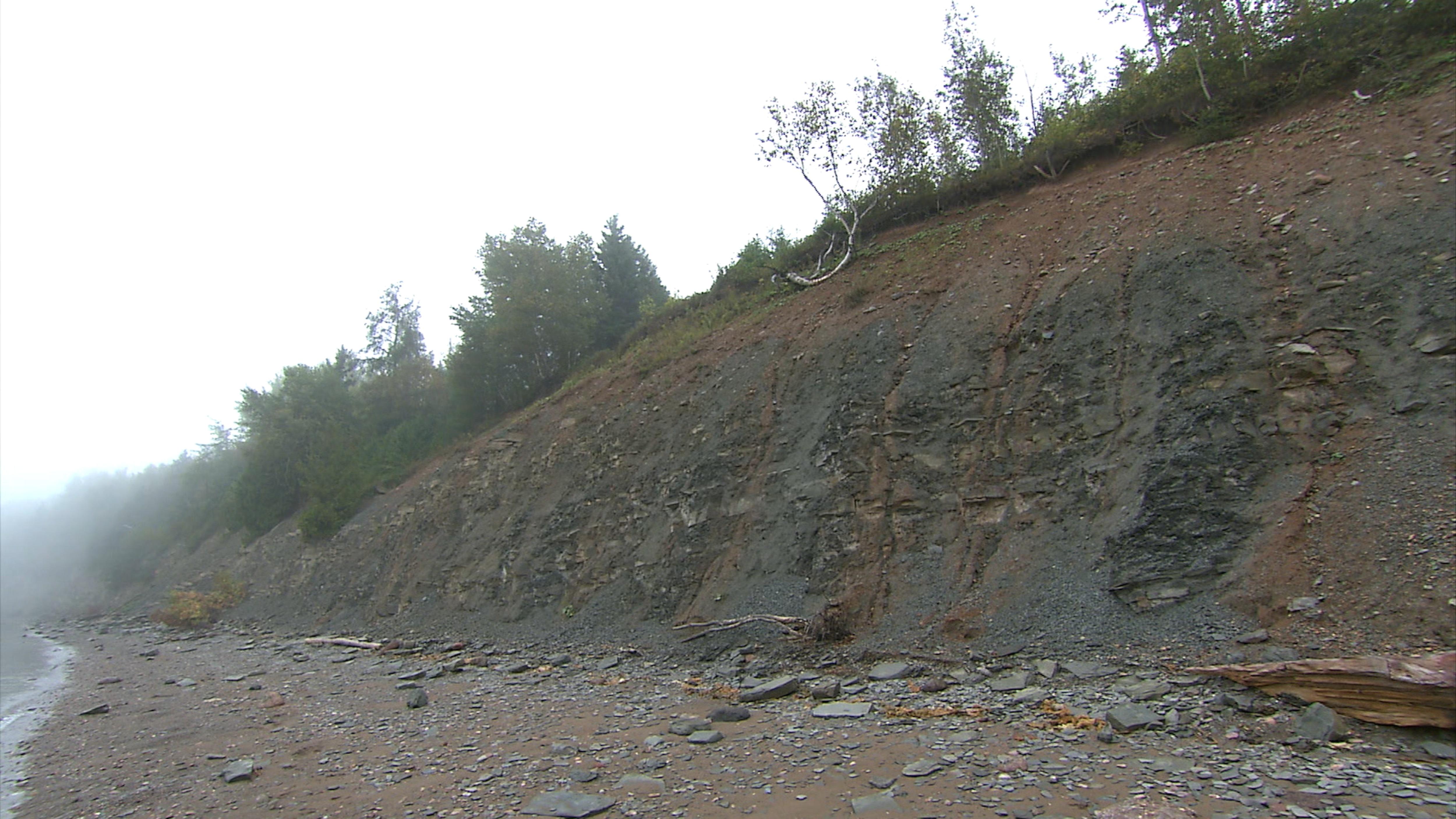La falaise de Miguasha, en Gaspésie