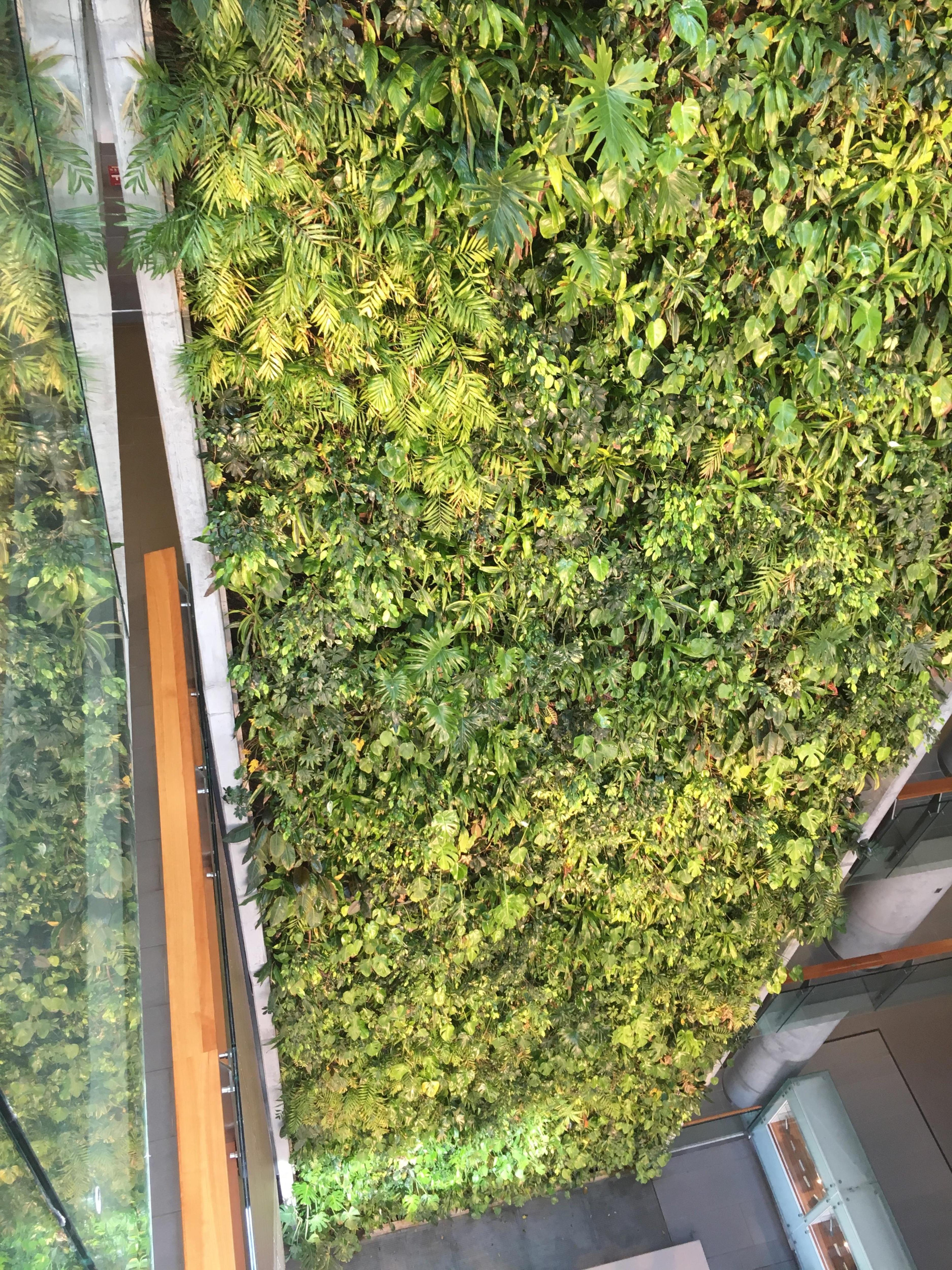 Un mur végétal vu de haut.