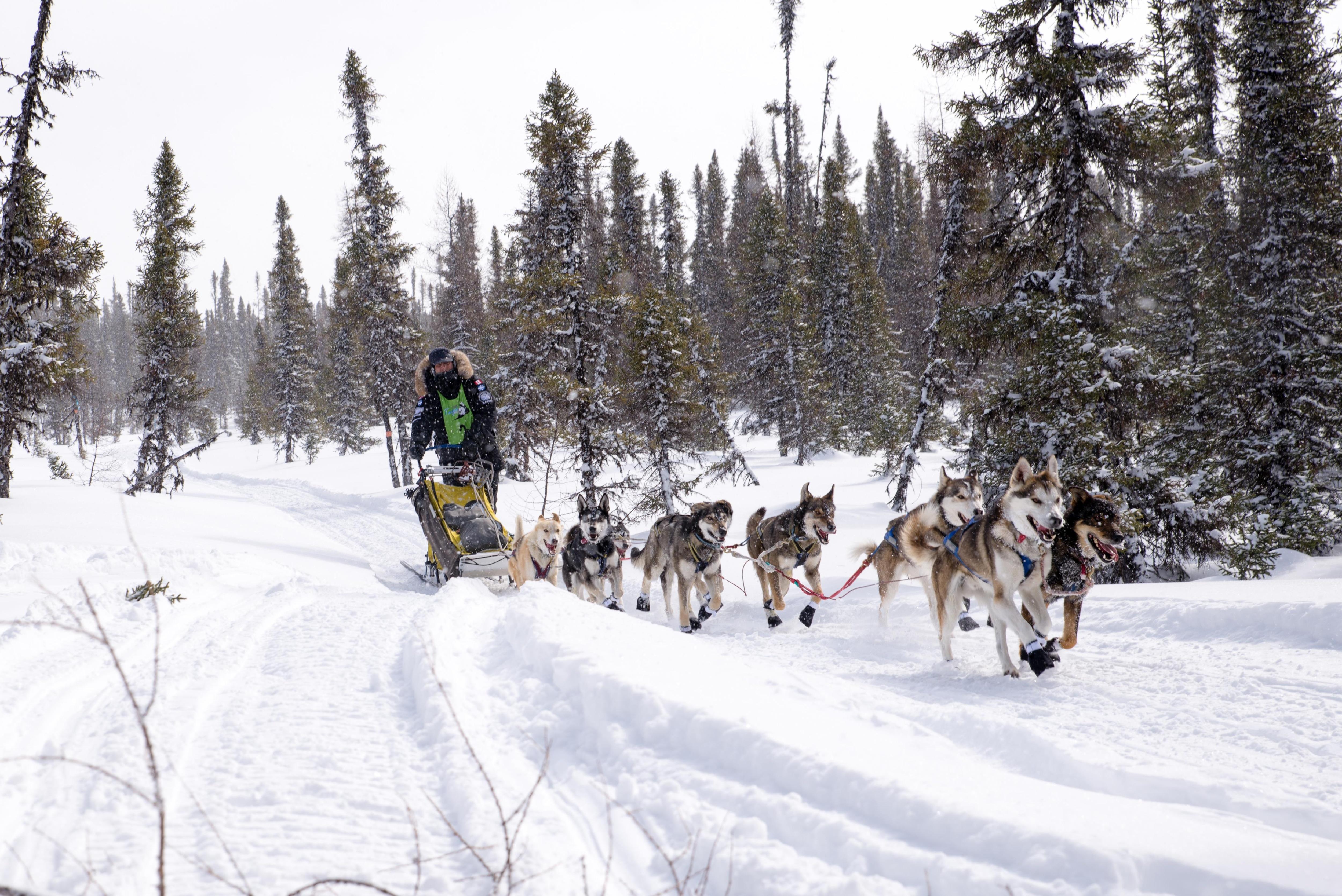 Le meneur de chiens Martin Massicotte conduit son attelage dans une section forestière du parcours.