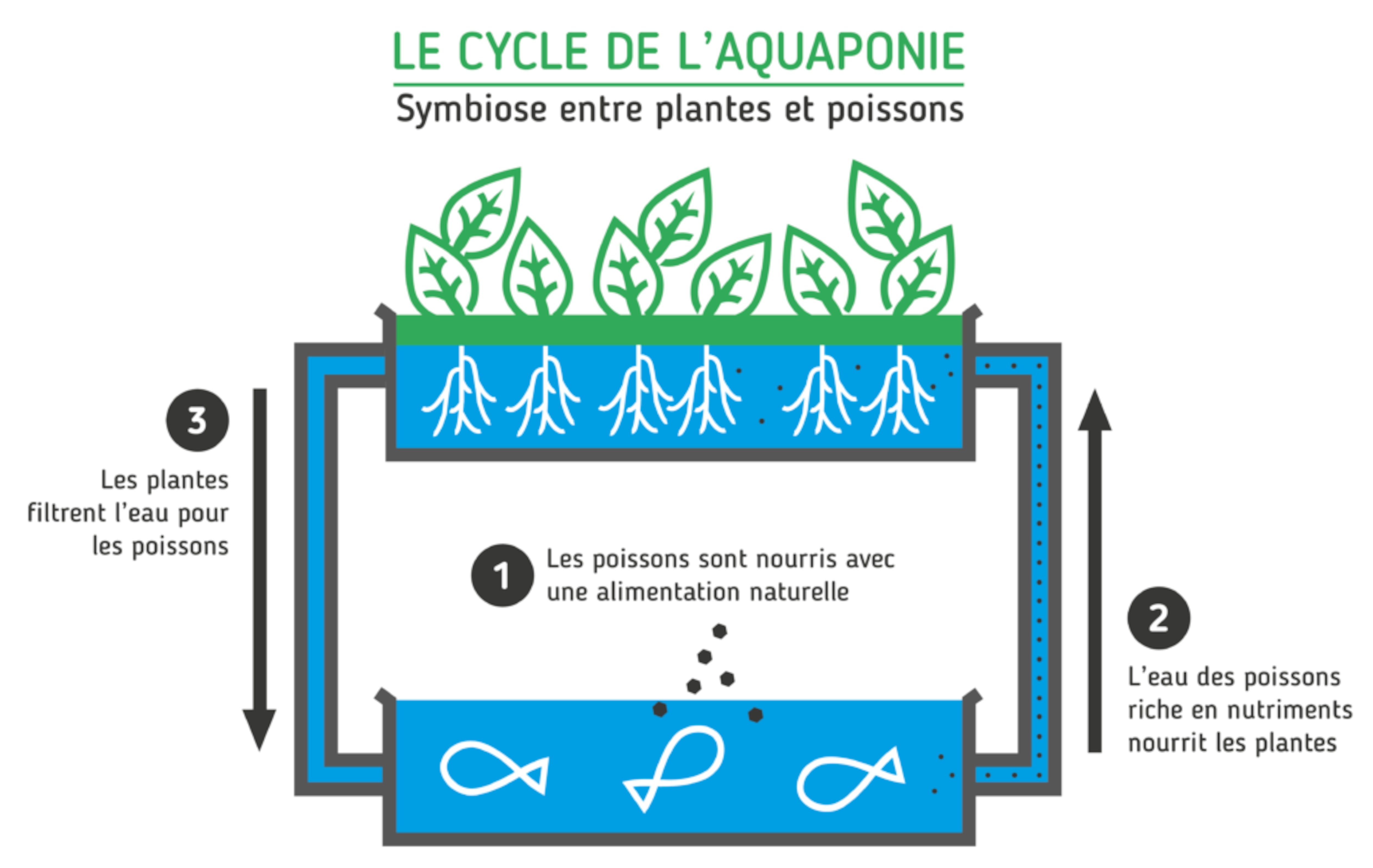 Un diagramme montrant le fonctionnement de base des fermes verticales d'Écosystèmes alimentaires urbains