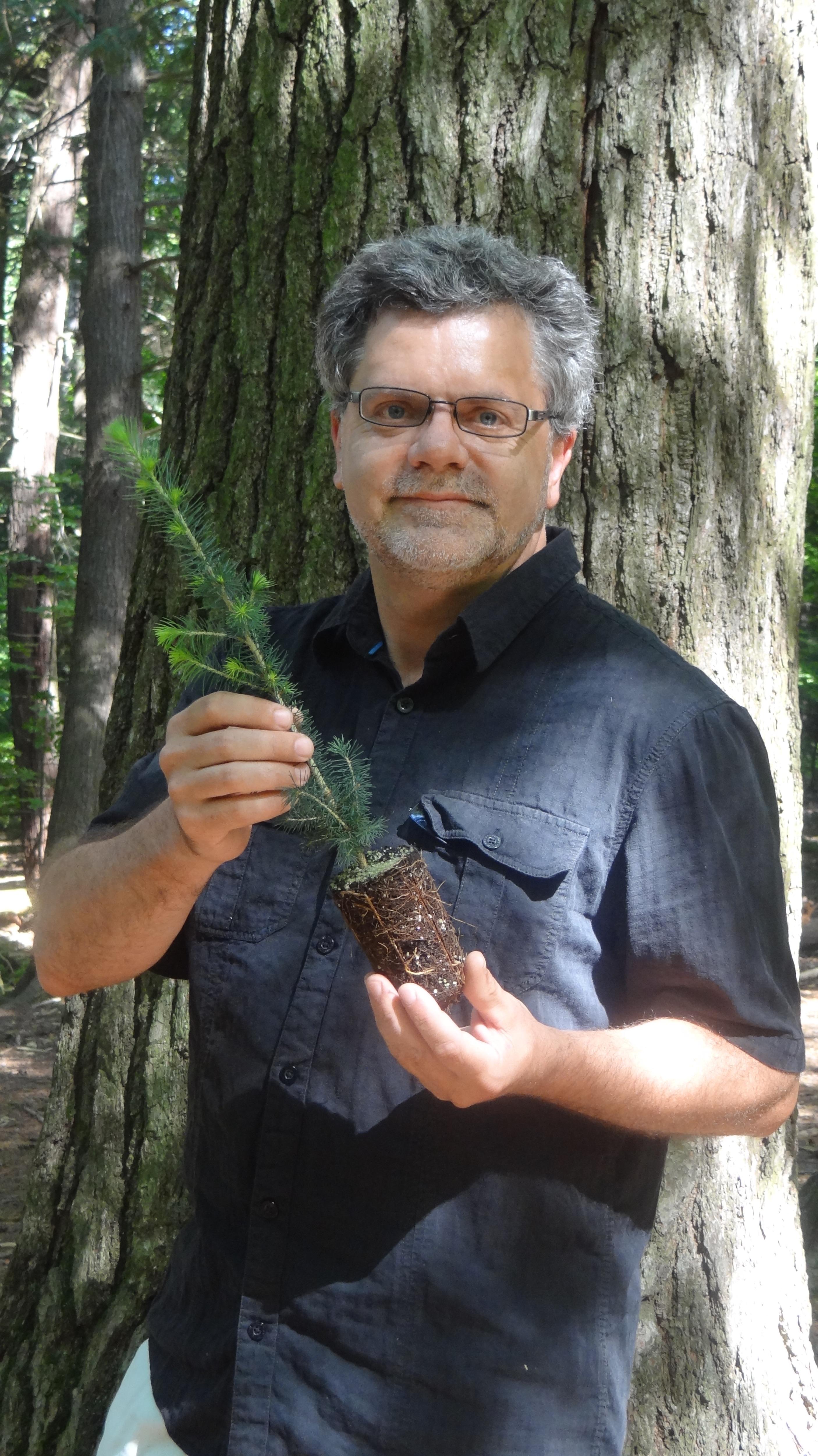 Photo de Jean Bousquet tenant un plant amélioré d'épinette blanche