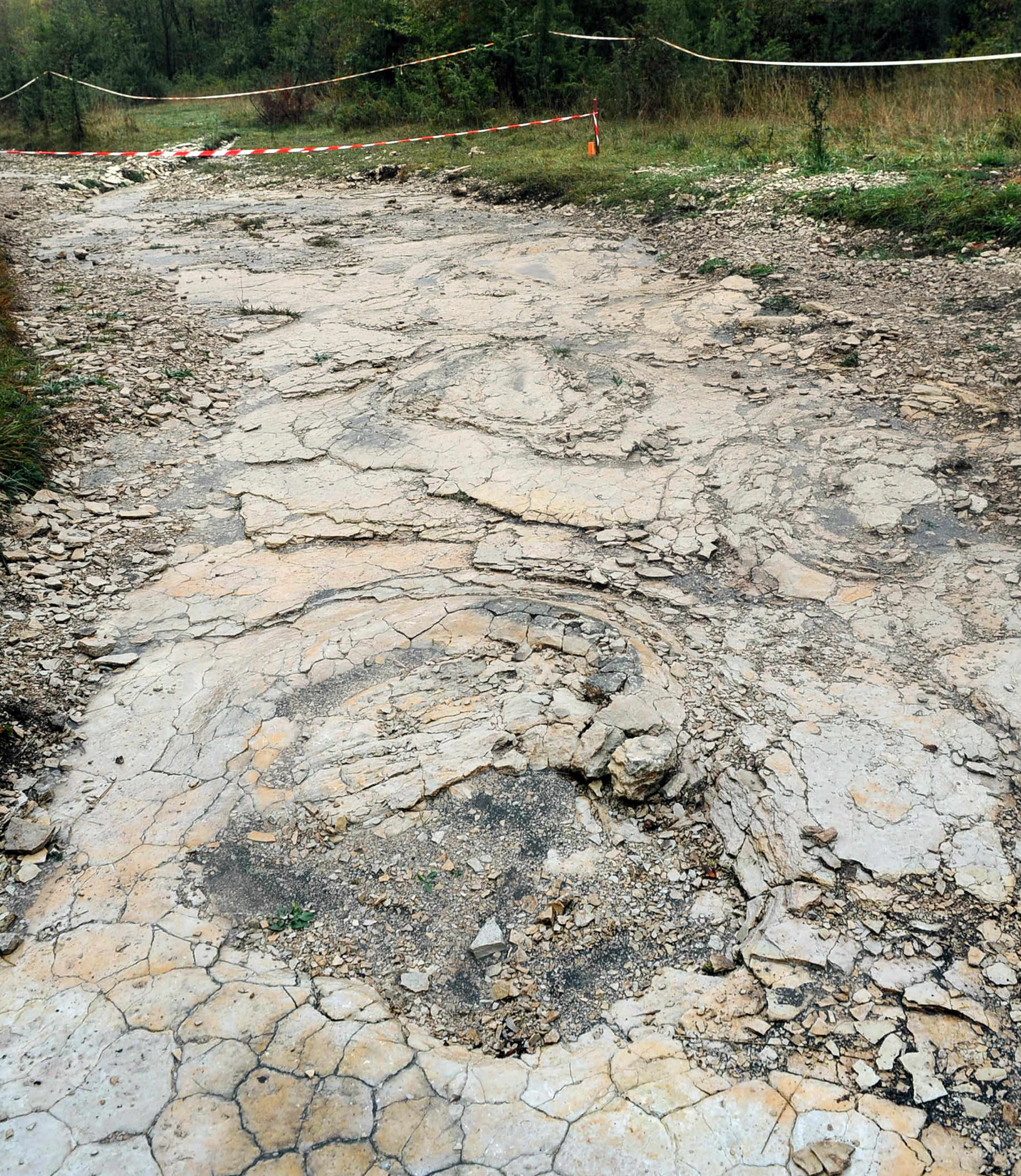 Sentier avec de nombreuses traces de pas de dinosaures.