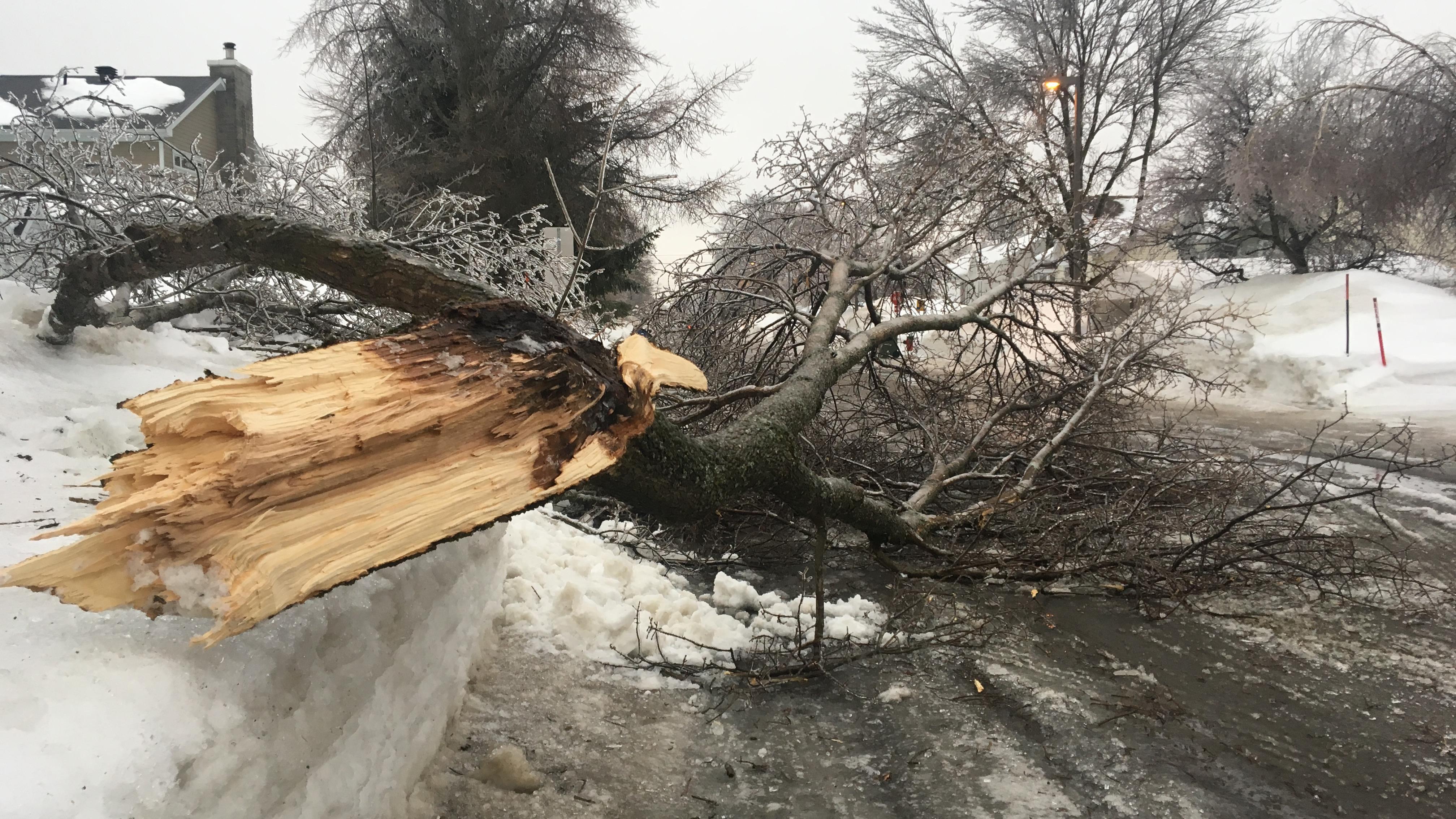 Un arbre a cédé à Québec sur la rue Beaubois.