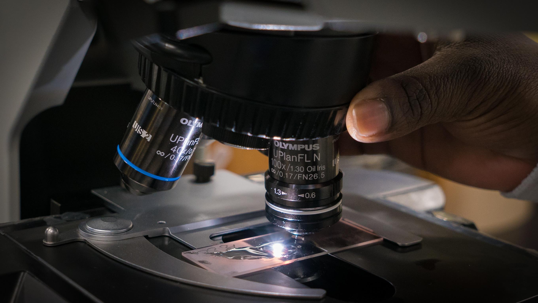 Observation de bactéries au microscope
