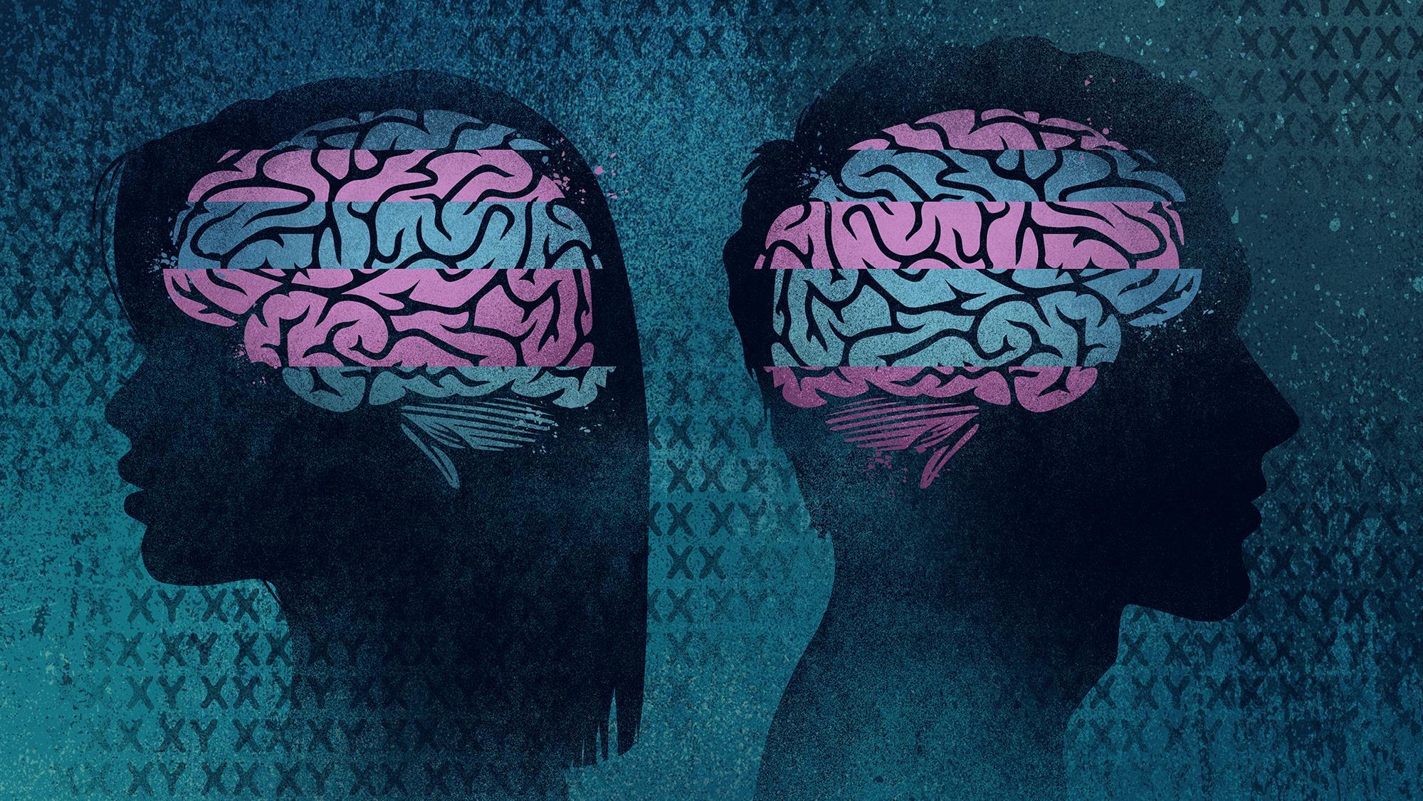 Illustration représentant le cerveau d'une femme et celui d'un homme.