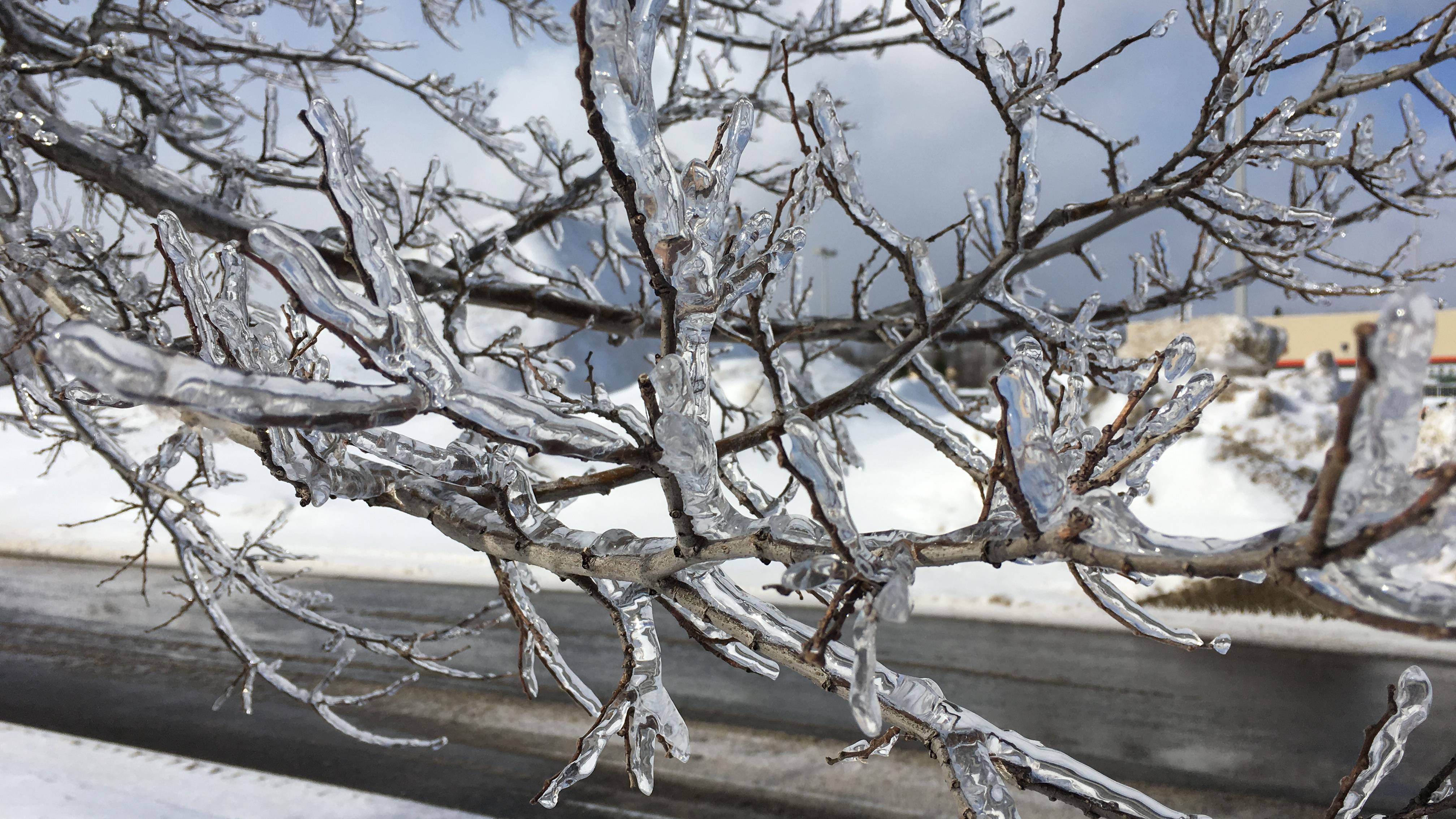 Une branche d'arbre enrobée de verglas