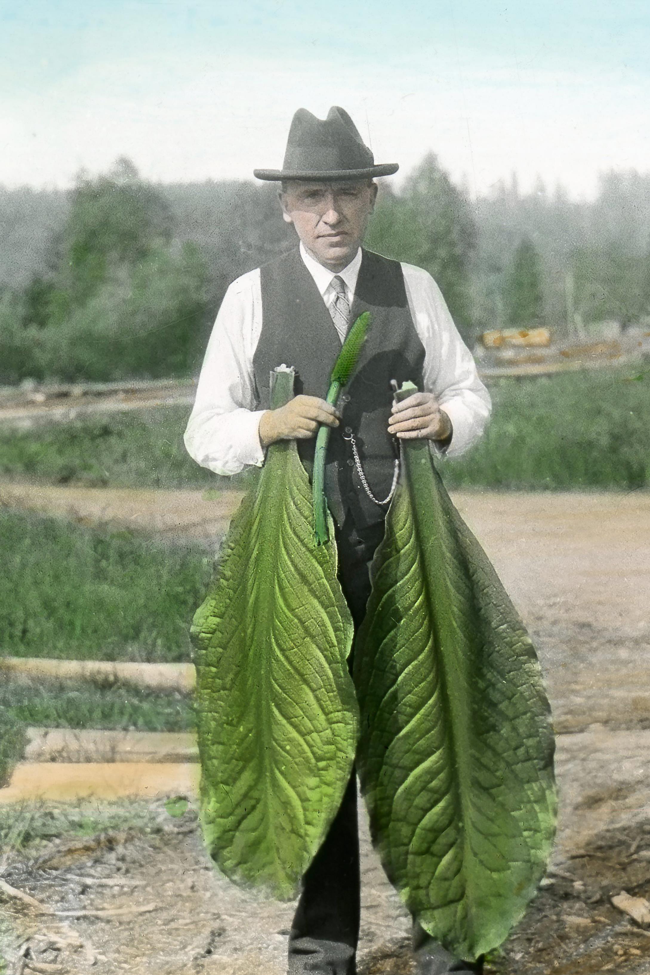 Le frère Marie-Victorin avec des feuilles de lysichiton d'Amérique (1933)