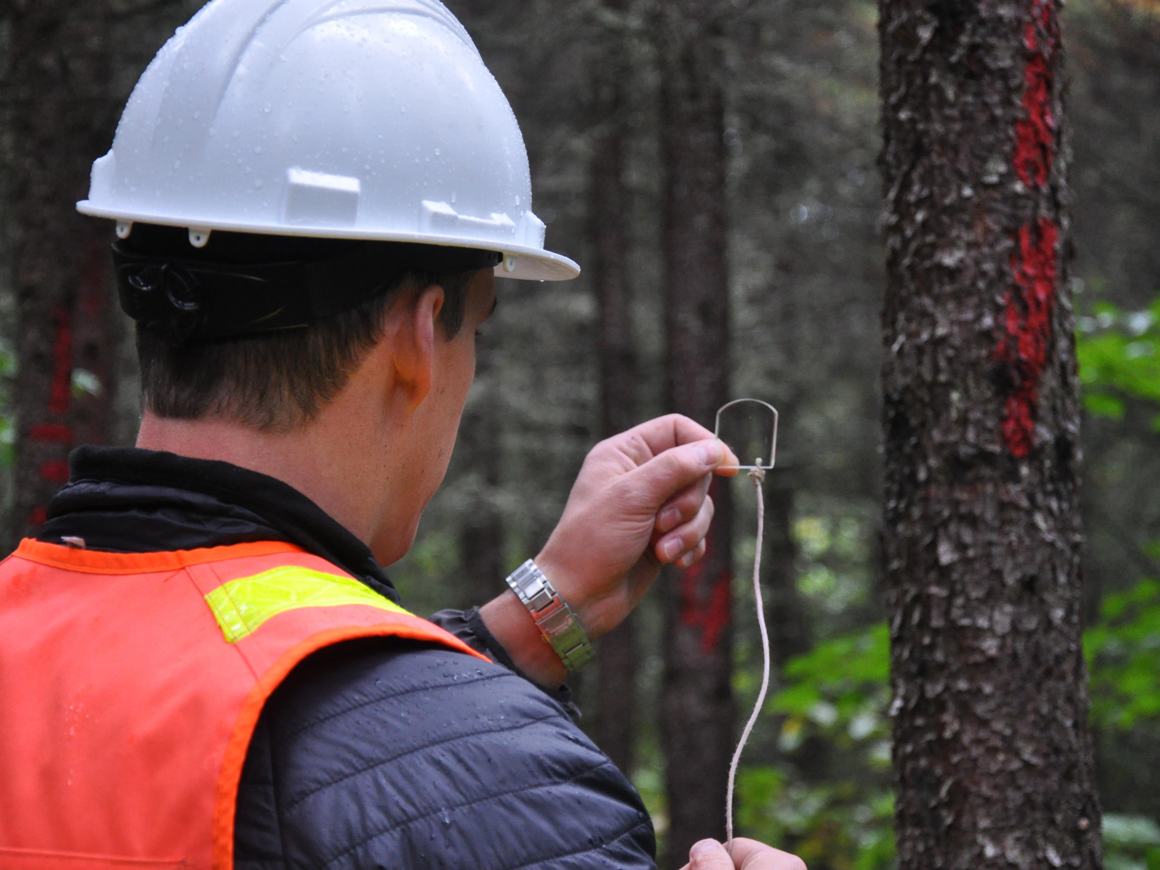Un employé du ministère, de dos, regarde dans un bout de verre le tronc d'un arbre.
