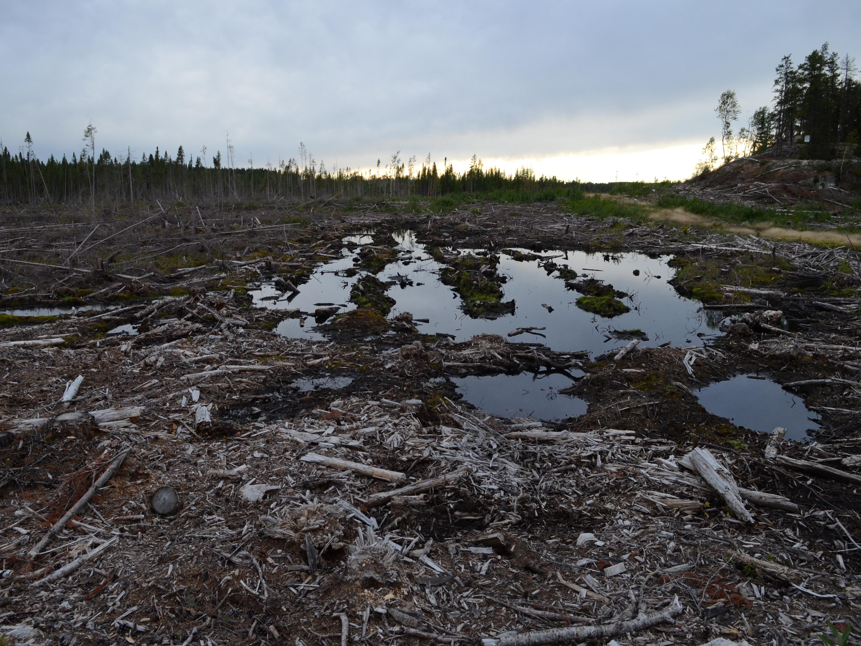 Flaque d'eau au milieu d'une coupe forestière