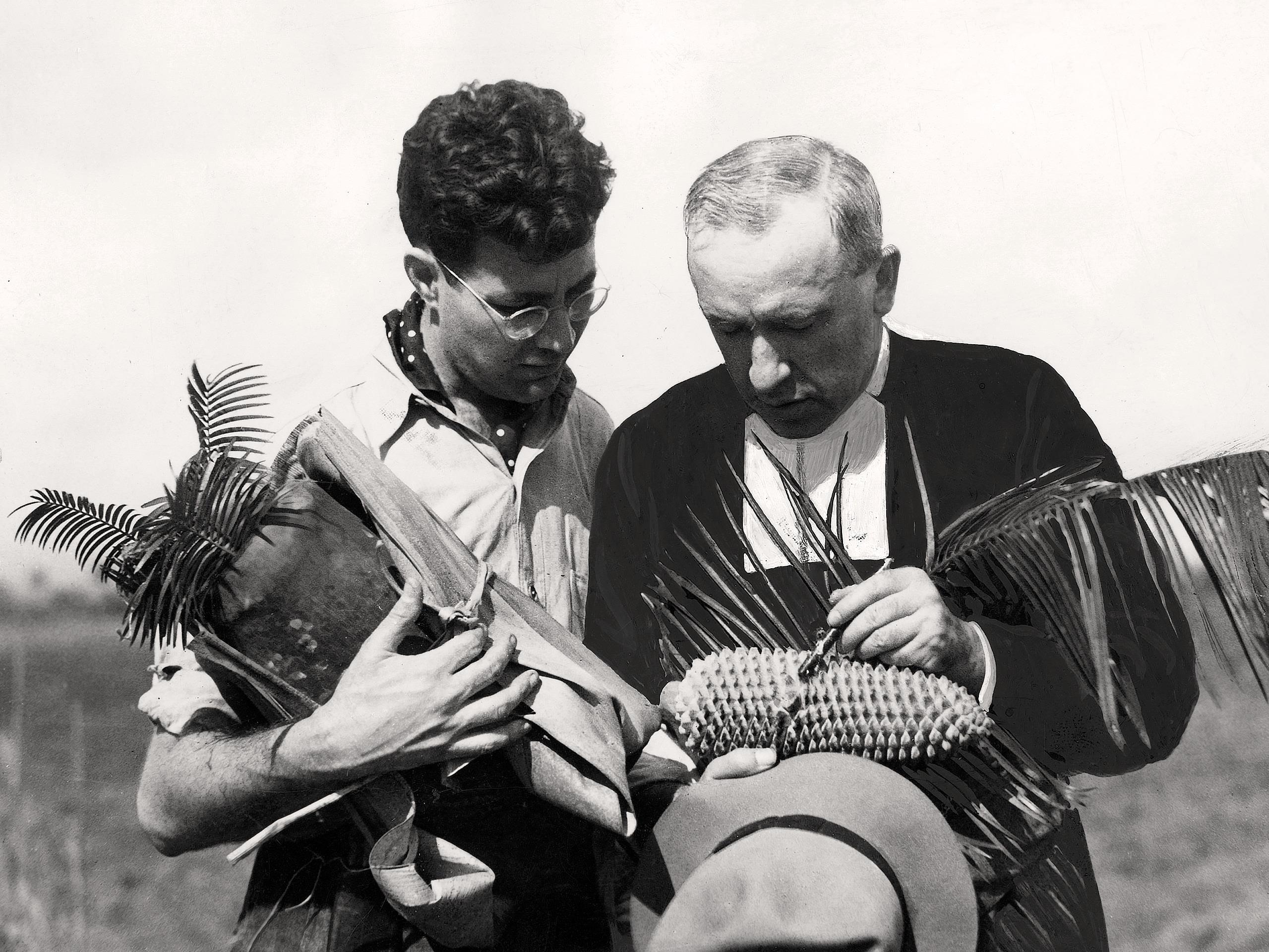 Marie-Victorin lors d'un voyage d'herborisation à Cuba (1939)