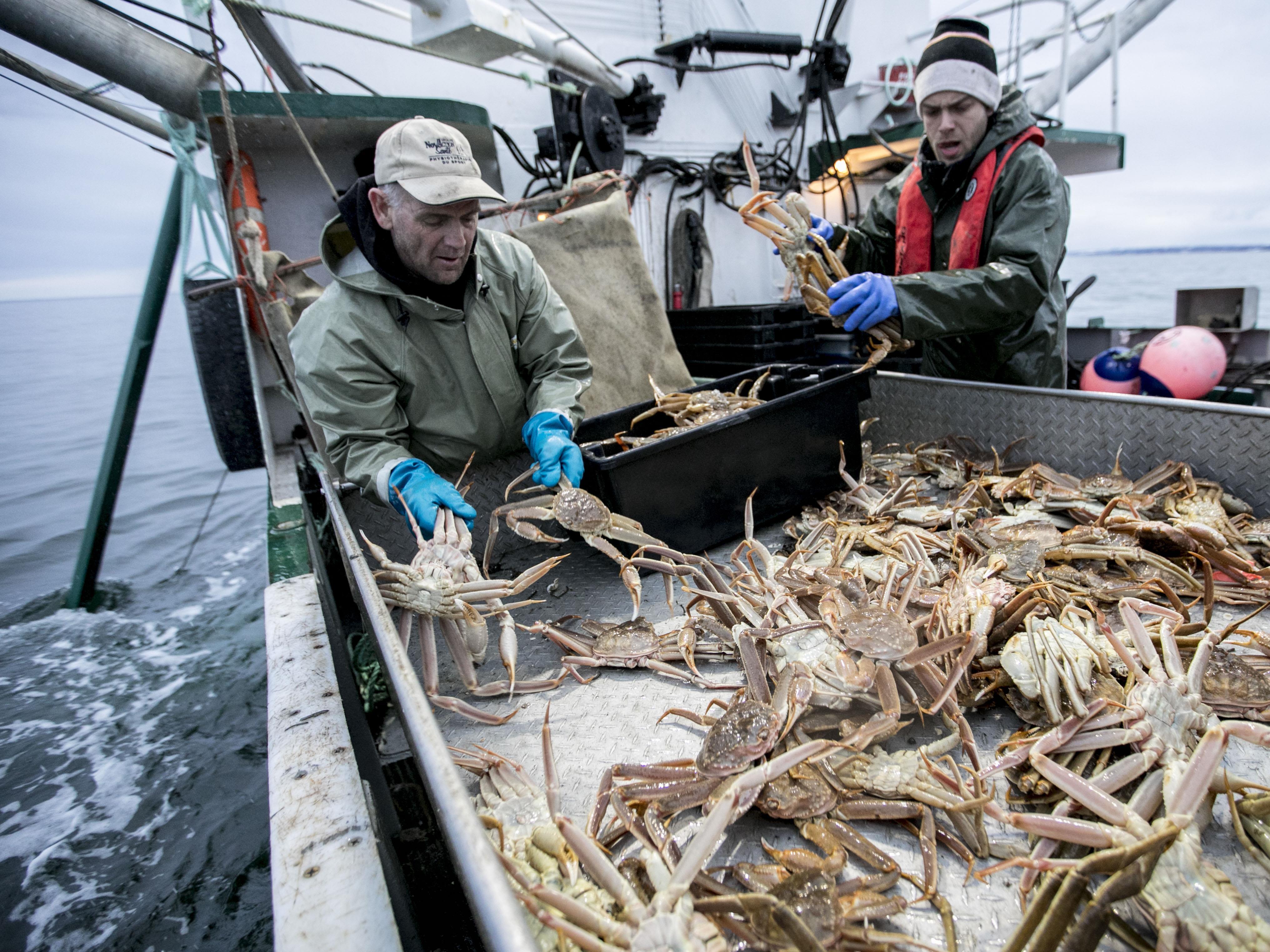 Des pêcheurs de crabe