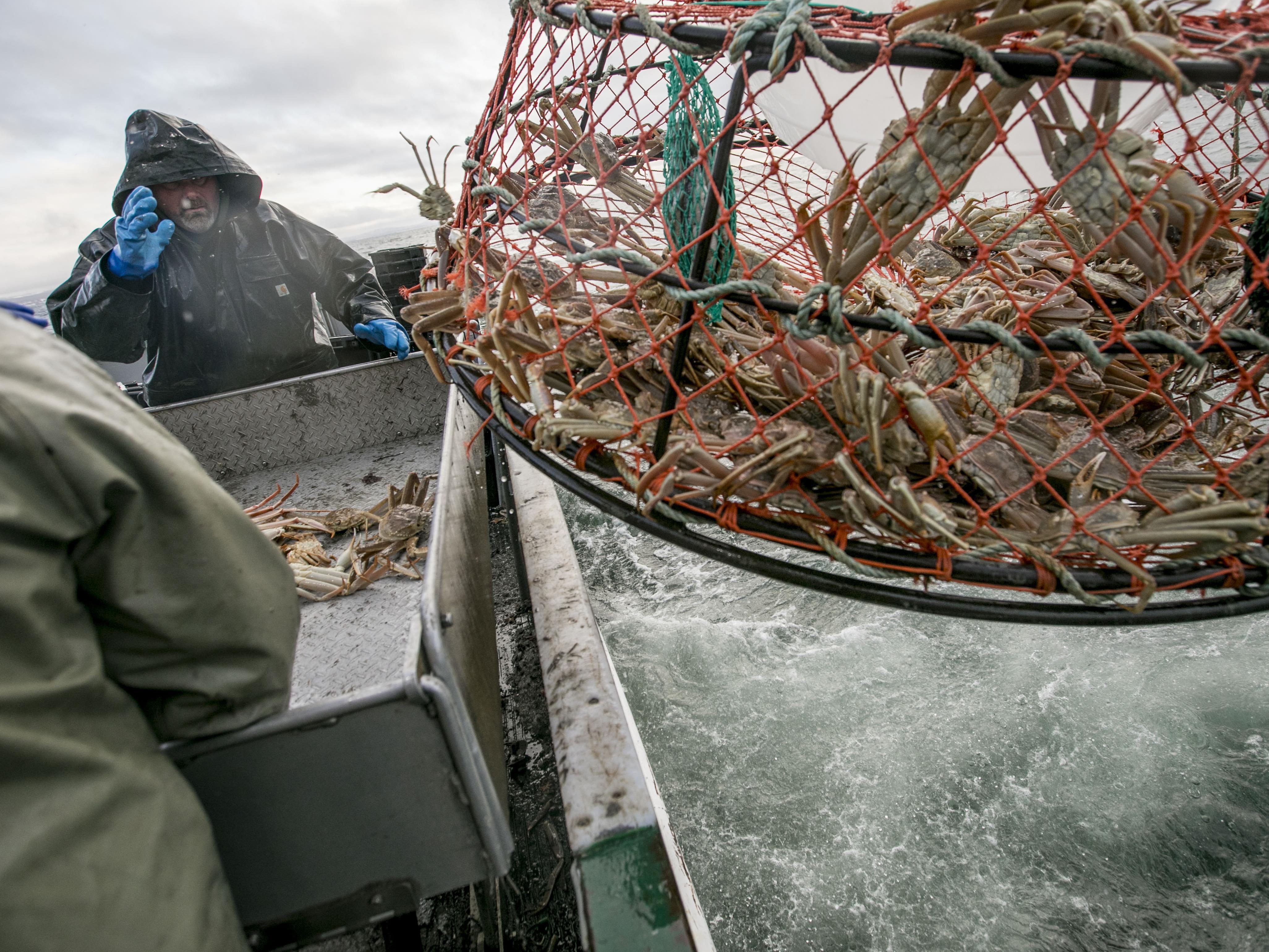 Des pêcheurs prêts à sortir le crabe de la cage