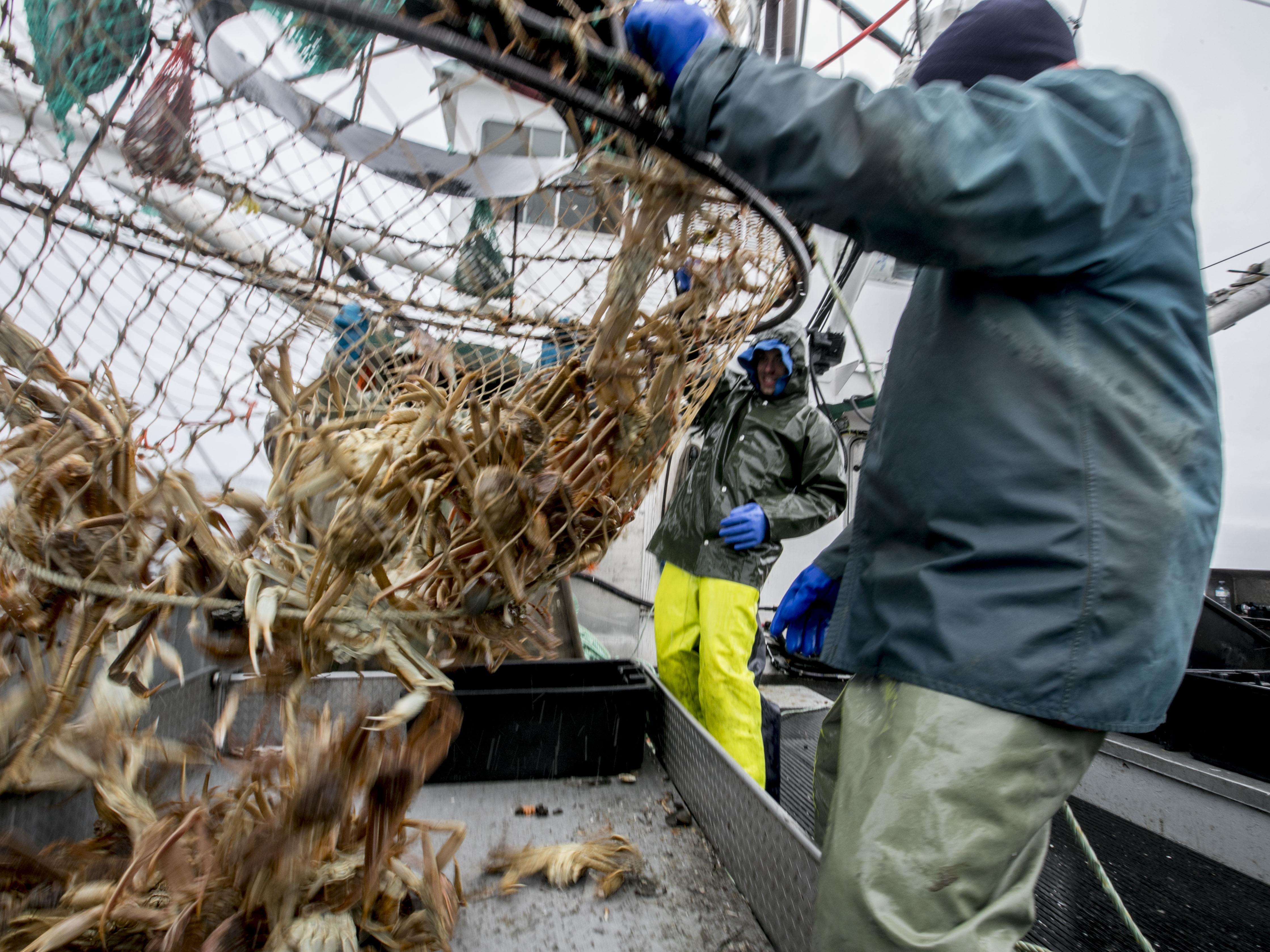 Des pêcheurs sortent le crabe de la cage