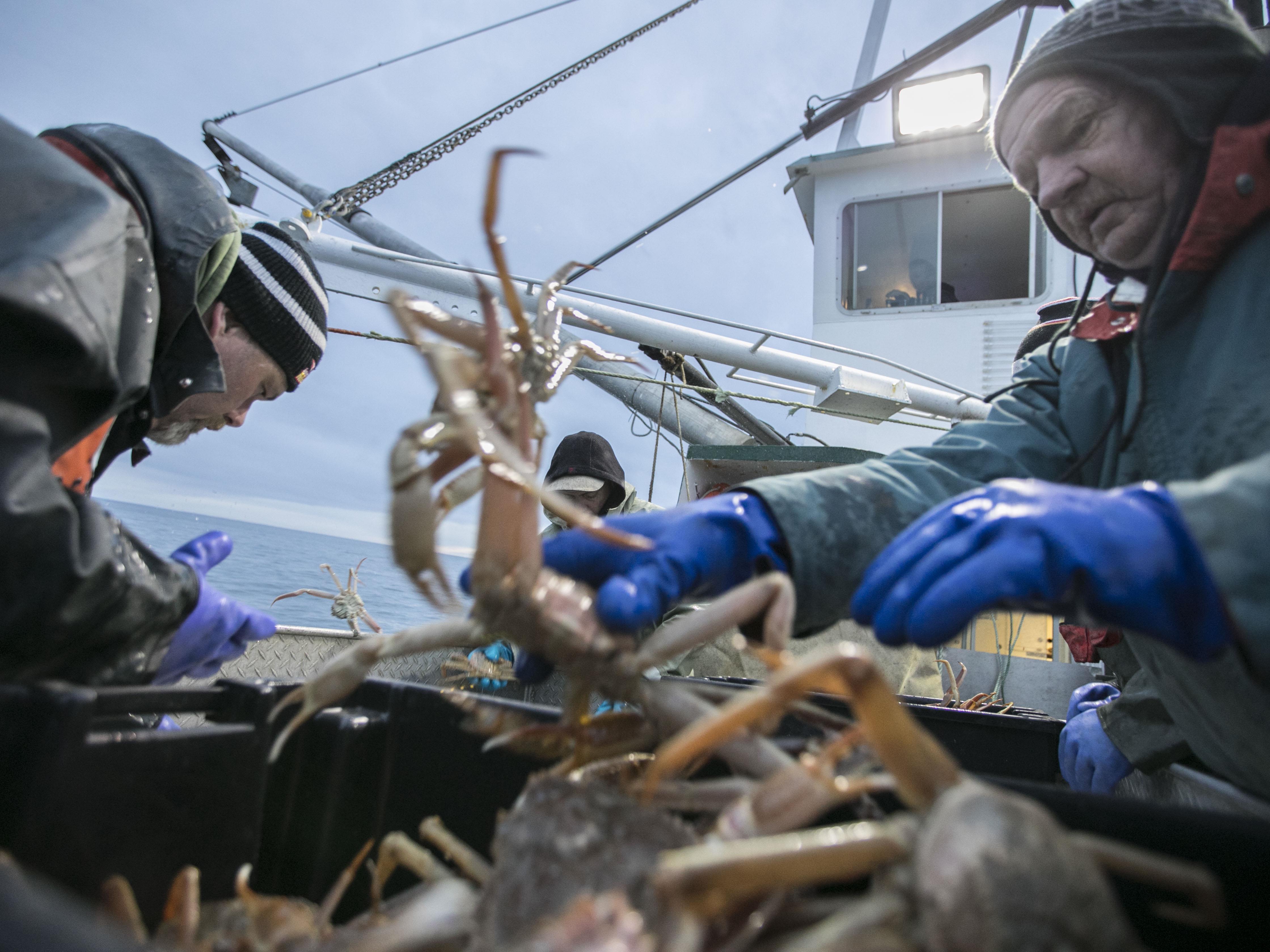 Triage des crabes par deux pêcheurs