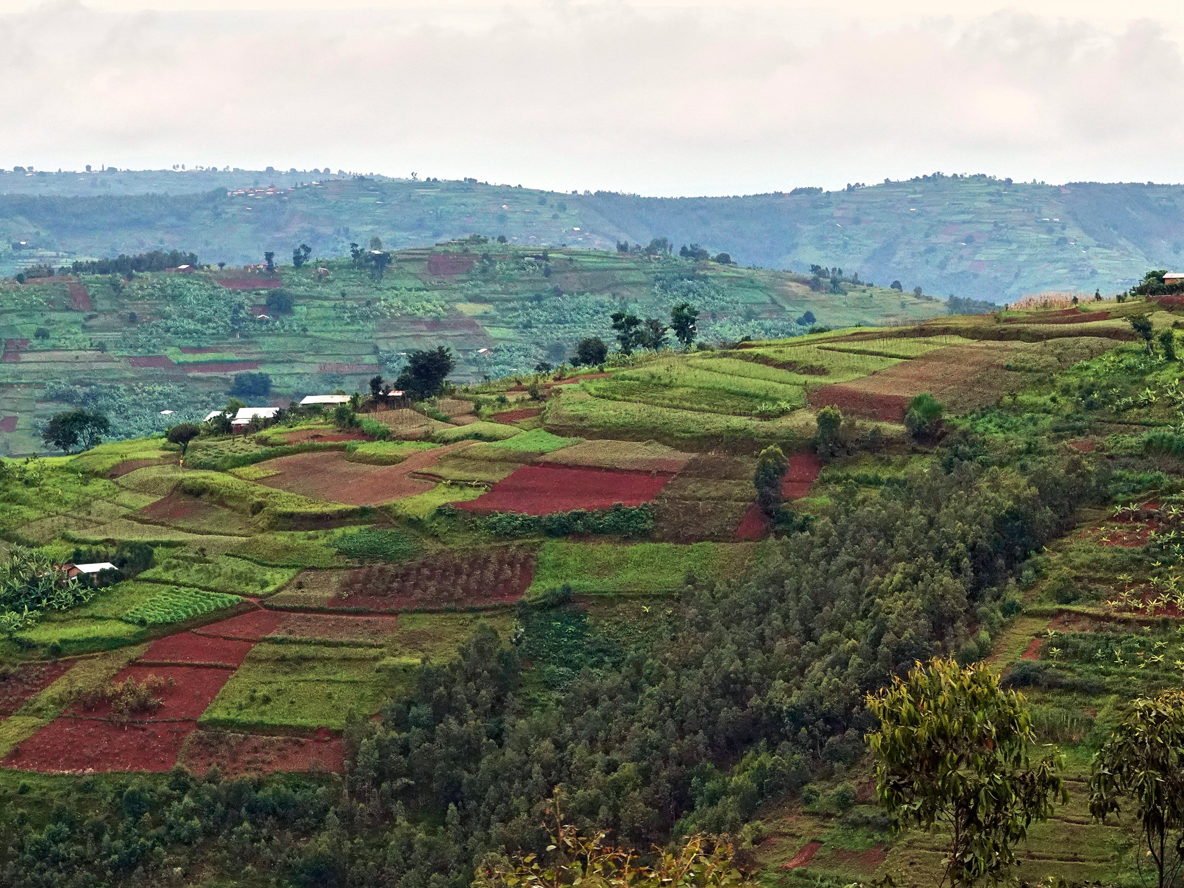 Des terres cultivées vues de haut. On dirait une courtepointe.