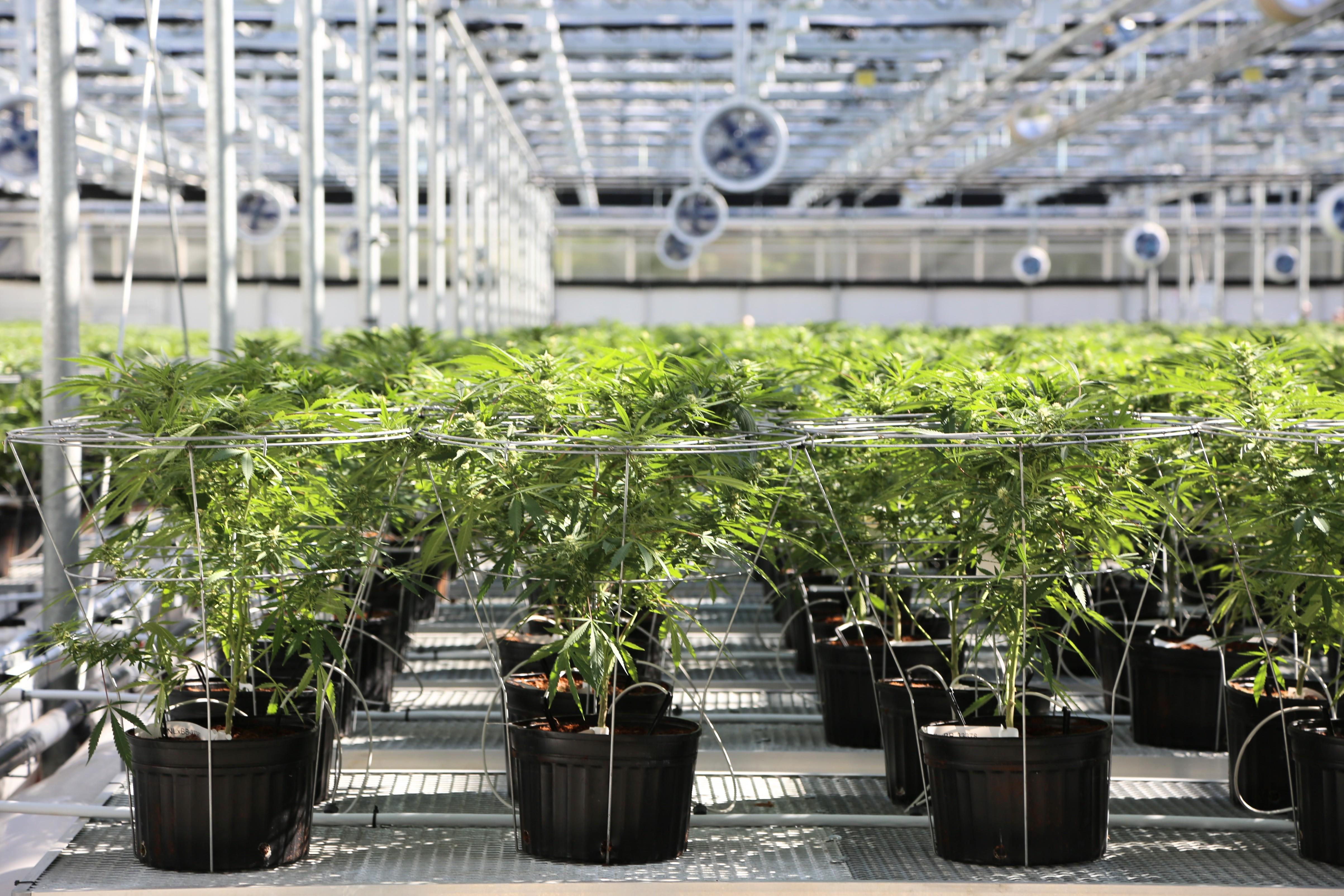 Utilisateurs de marijuana datant site