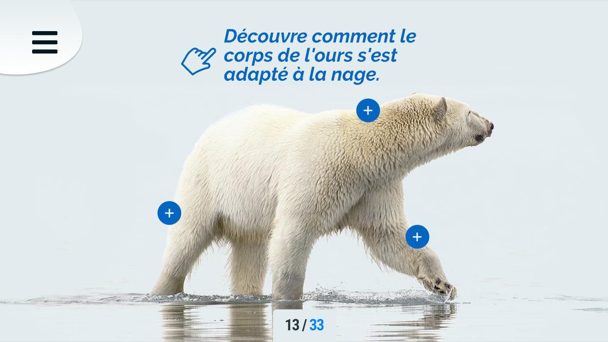 Une image de l'appli Aventure en Arctique : Un ours polaire.