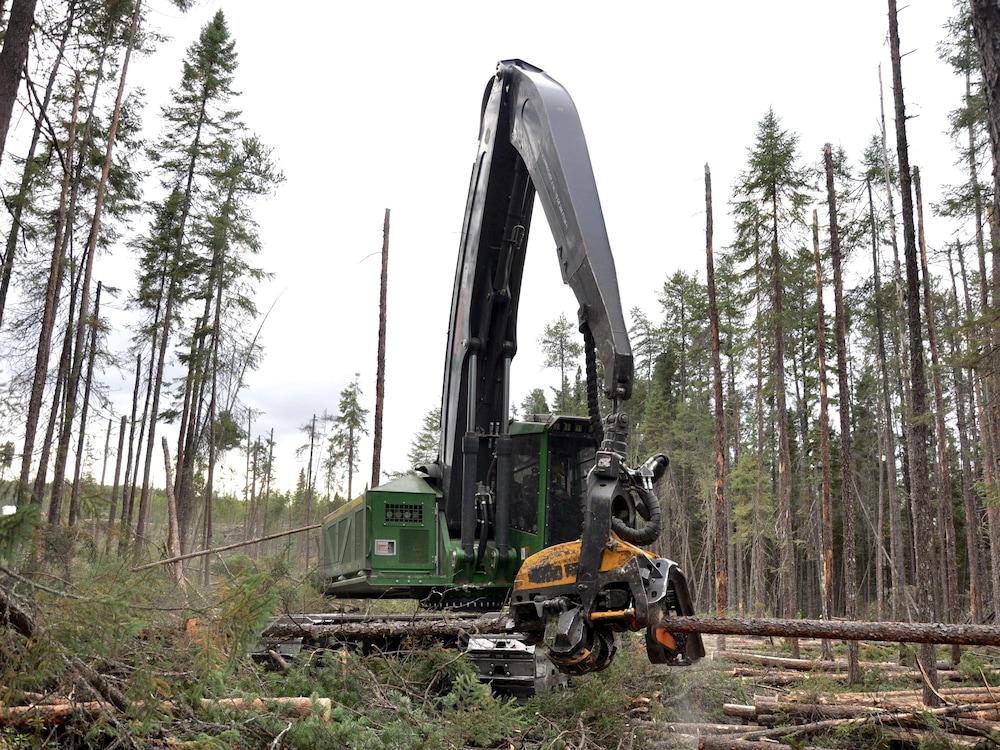 Abatteuse multifonctionnelle en train de scier un arbre.