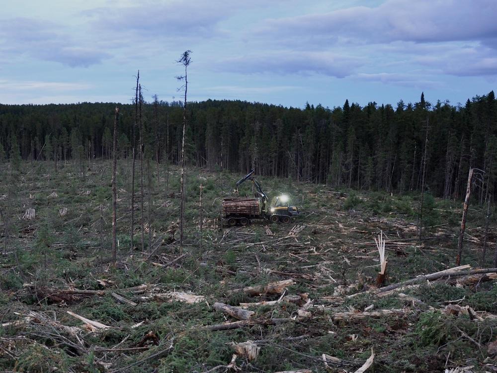 Abatteuse multifonctionnelle au milieu d'une coupe forestière à la tombée du jour.