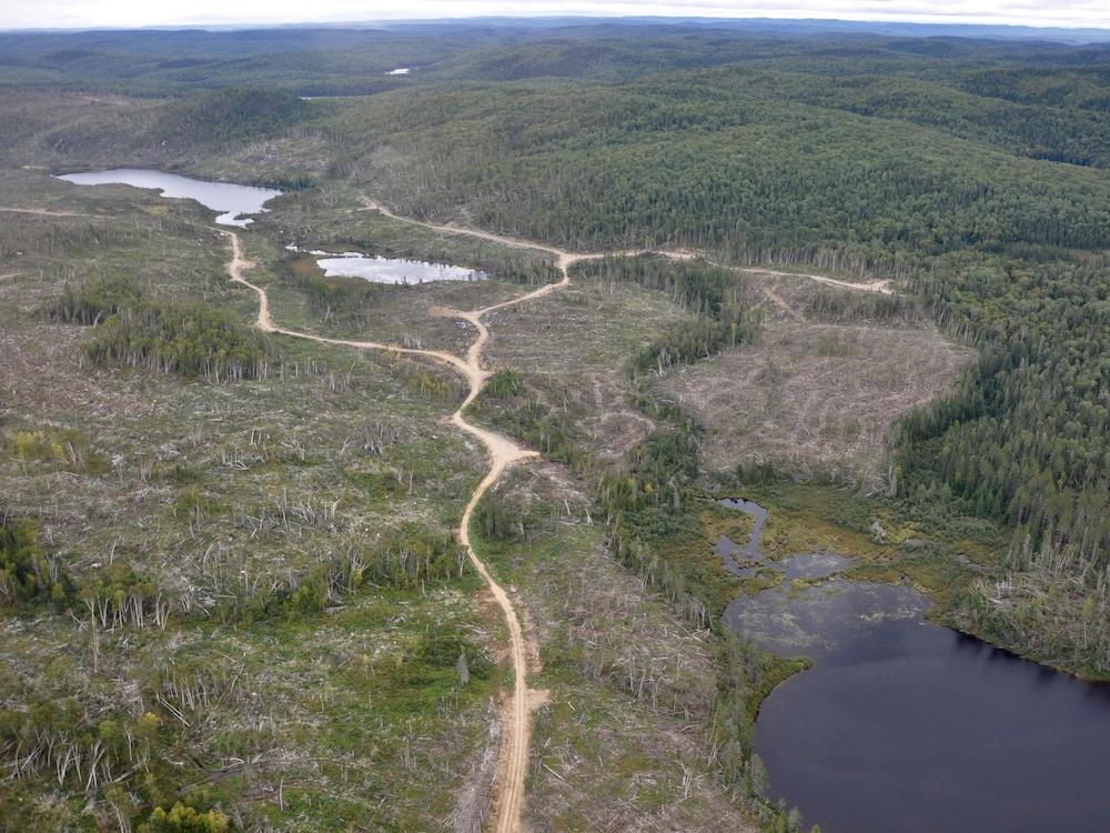 Photo aérienne d'une coupe forestière et d'un chemin forestier.