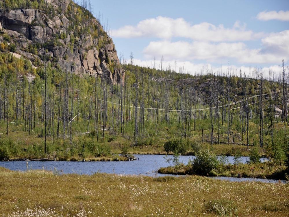 Site d'un ancien feu de forêt en Haute-Mauricie.