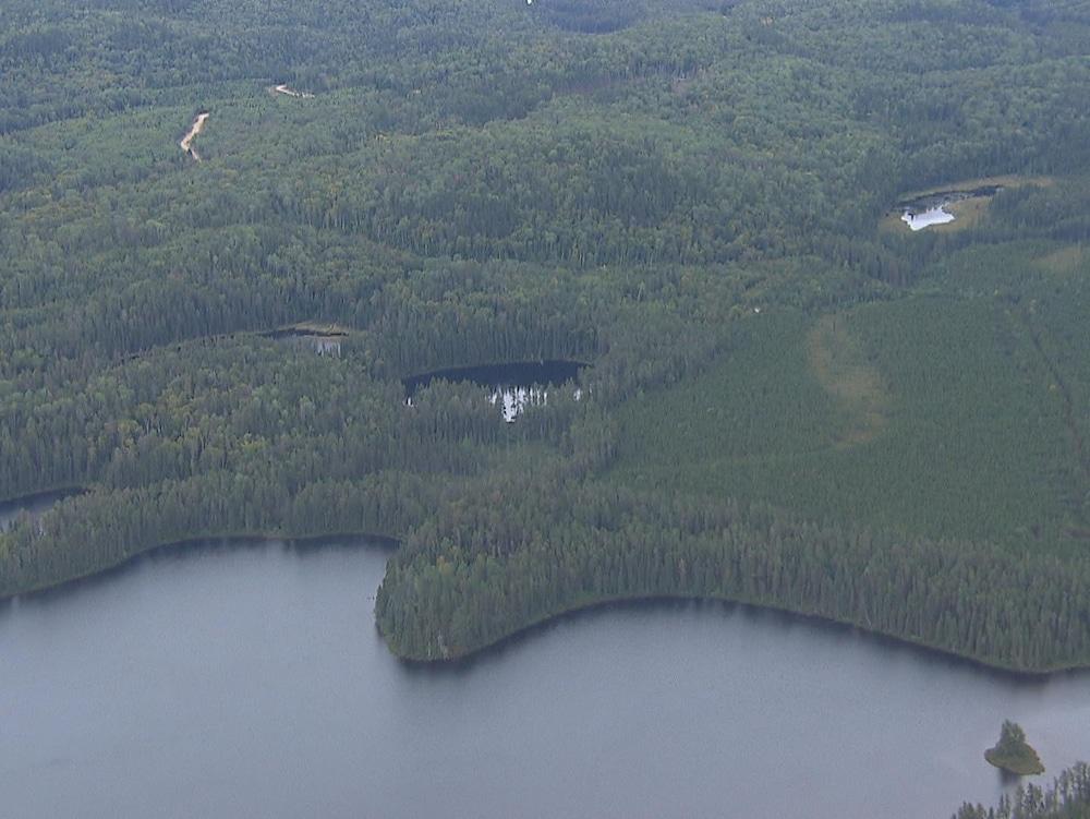 Photo aérienne d'une ancienne coupe forestière en train de repousser. Au bas de l'écran se trouve une étendue d'eau.