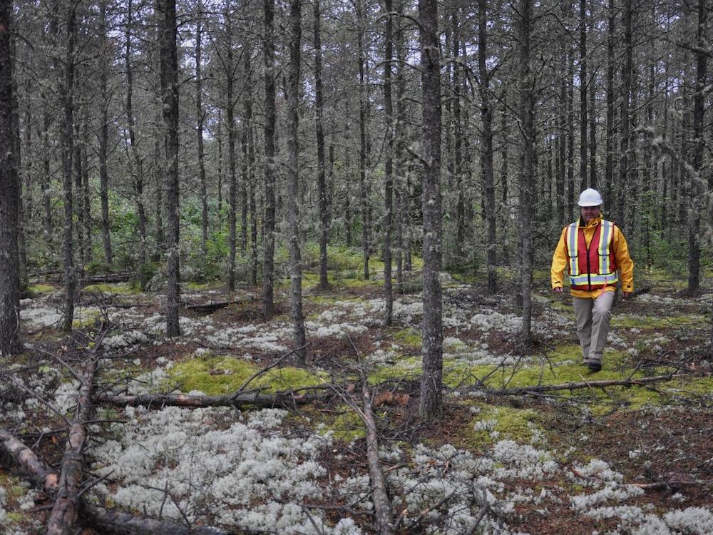 Jean-Pierre Saucier marche dans une forêt de conifères.