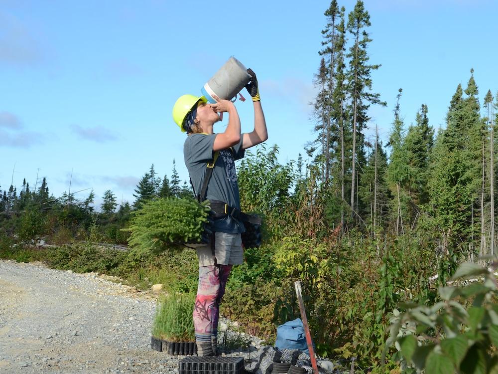 Planteur d'arbres qui s'abreuve lors d'une pause.