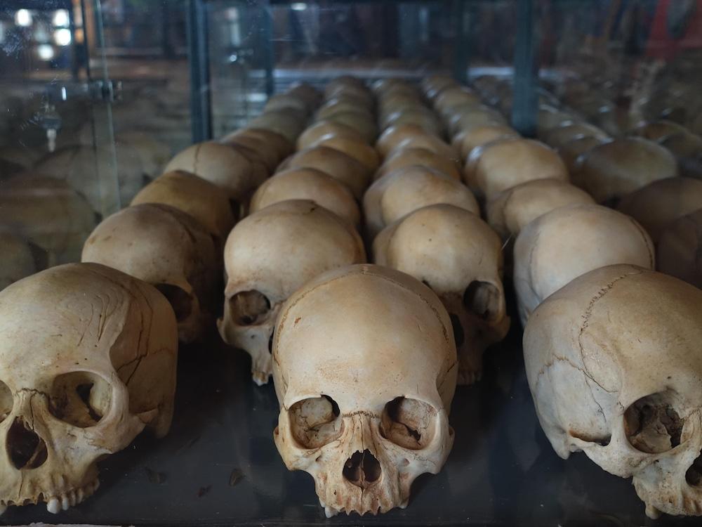 Des crânes dans une vitrine.