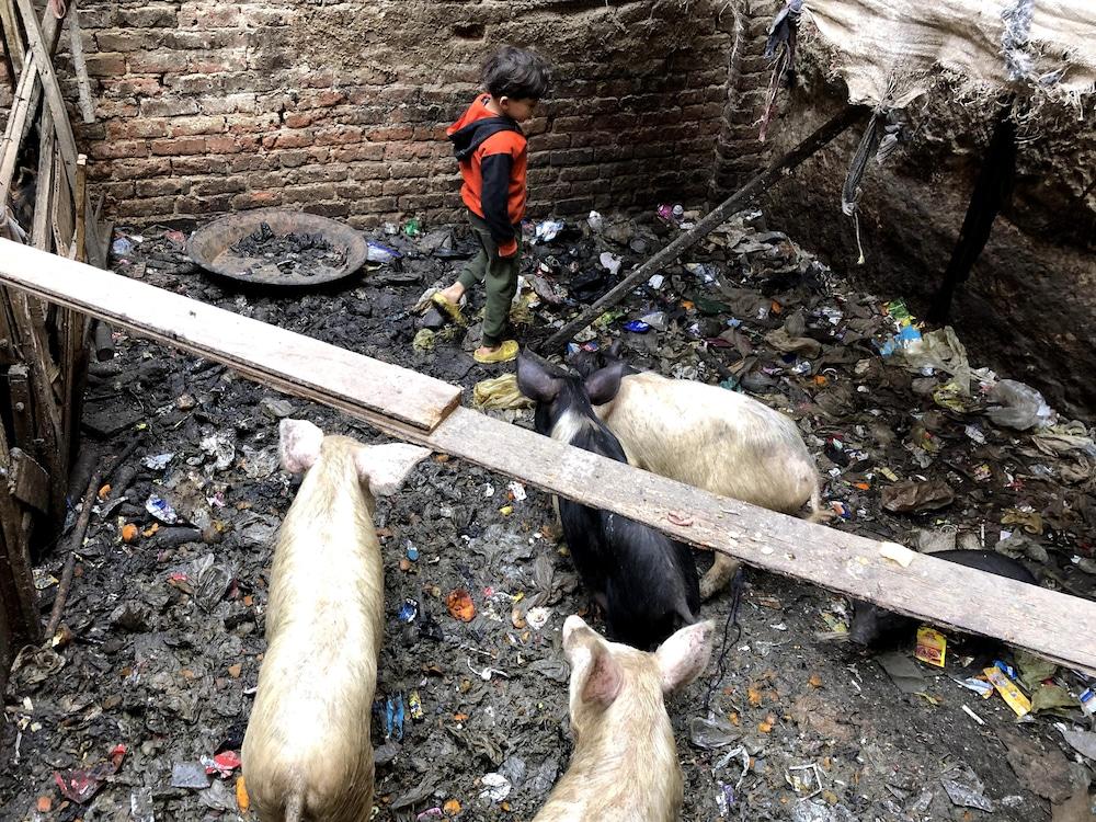 Le petit Kerlos inspecte l'enclos où se trouvent les porcs de la famille.