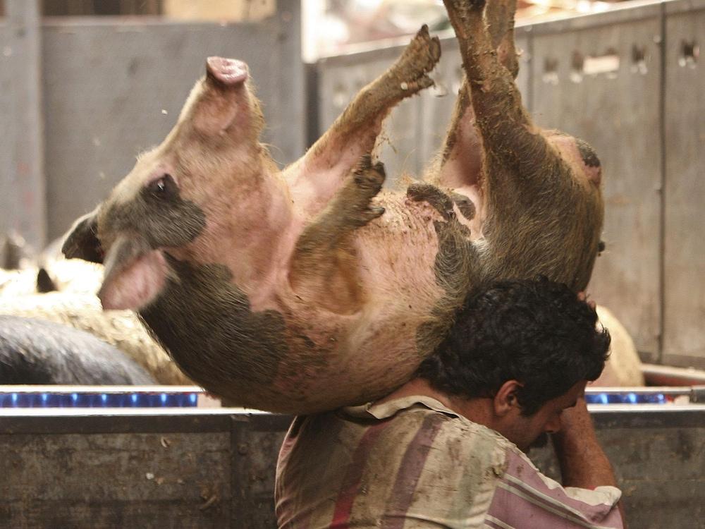 Un homme transporte un porc.