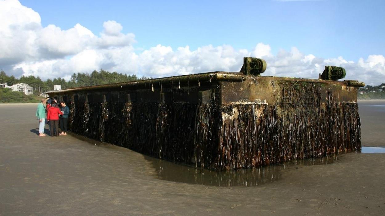 Un quai japonais couvert d'espèces marines échoué sur la côte de l'Oregon