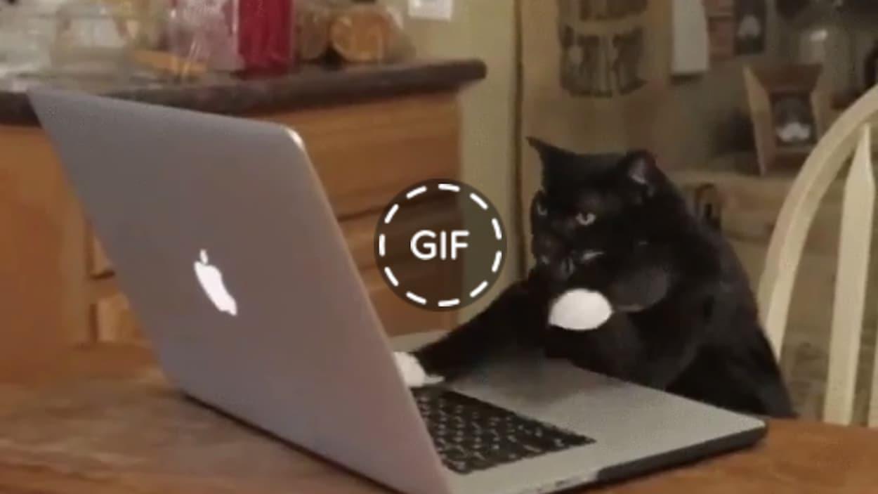 Un gif de chat qui tape à l'ordinateur.