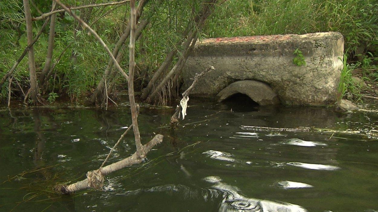 Tuyau de déversement d'eaux usées dans le fleuve Saint-Laurent, dans l'arrondissement de Verdun