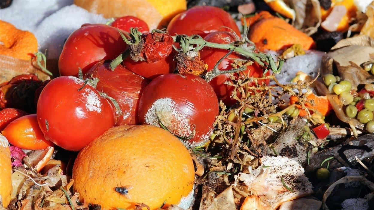 À l'échelle mondiale, environ le tiers des aliments destinés à la consommation humaine sont gaspillés. En prolongeant la durée de conservation des aliments, l'emballage actif pourrait contribuer à régler le problème.