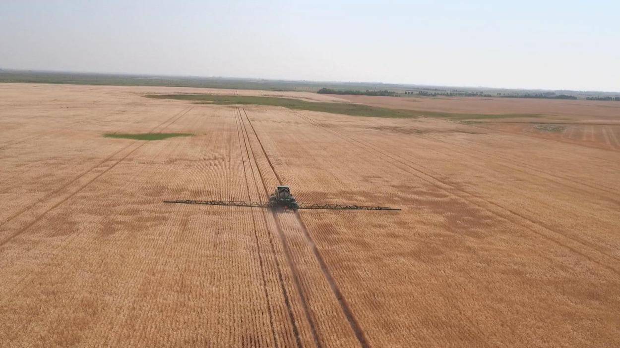 Image aérienne de pulvérisation d'un très grand champs de blé.