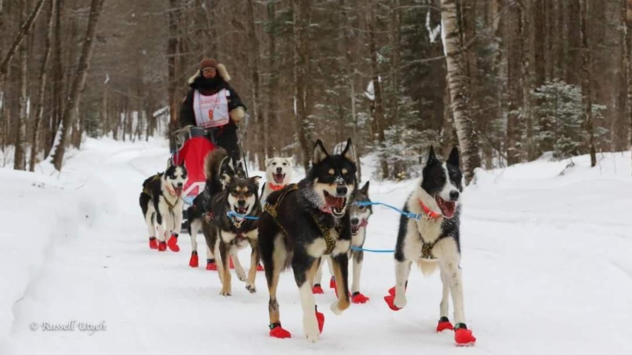 On voit les chiens attelés en avant-plan avec le meneur Rémy Leduc à l'arrière
