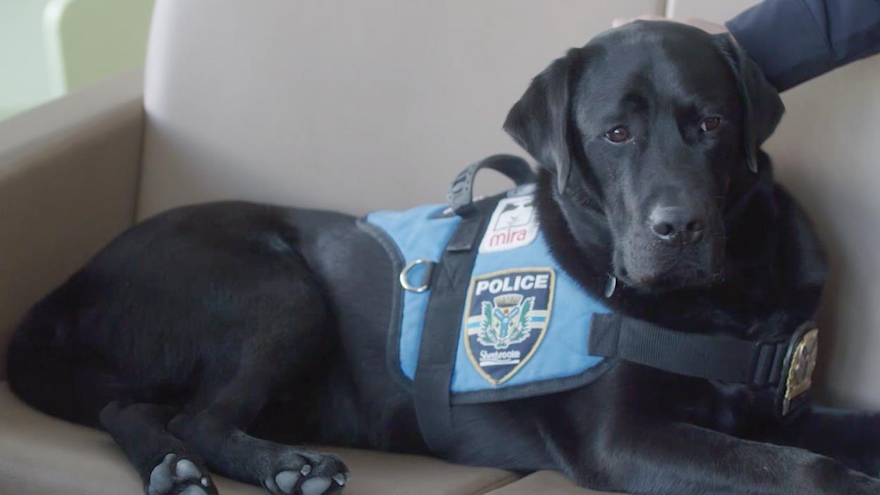 Un chien policier, mira.