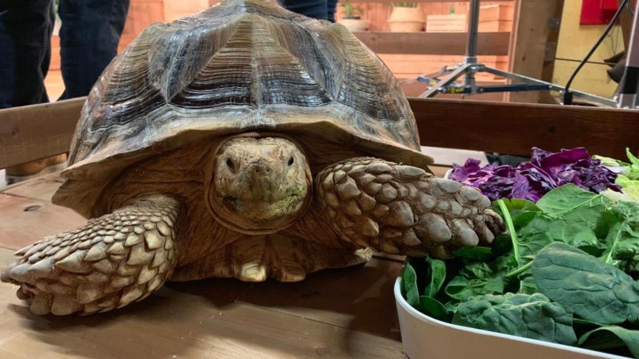 Une tortue sur le plateau des Poilus.